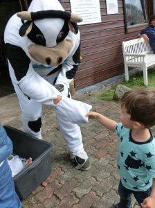 """Karl begrüßt eine """"echte"""" Kuh auf der Norla"""