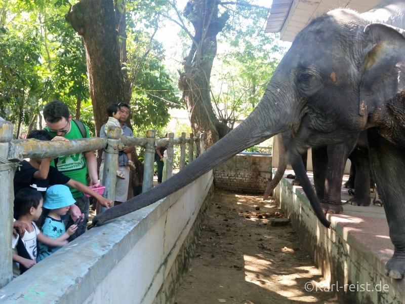 Elefanten füttern Yangon Zoo