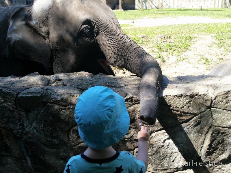 Yangon Zoo Elefant füttern 4