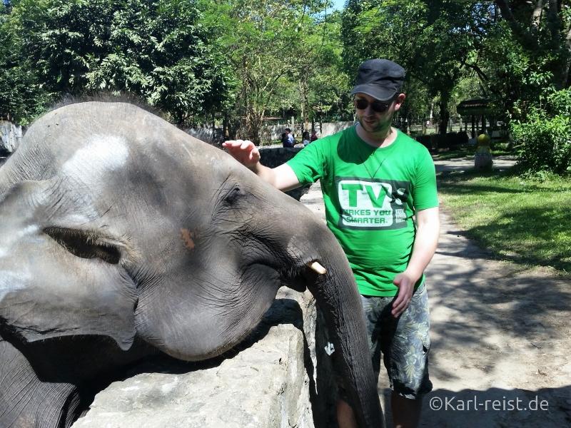Elefant streicheln Yangon Zoo