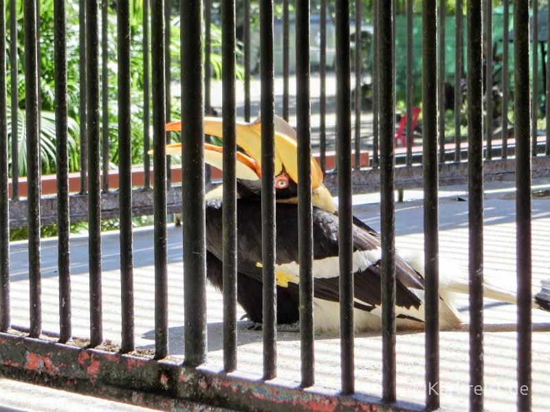 Tukan ähnlicher Vogel im Zoo Yangon