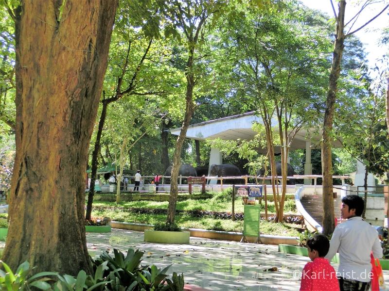 Elefanten Plateau Yangon Zoo