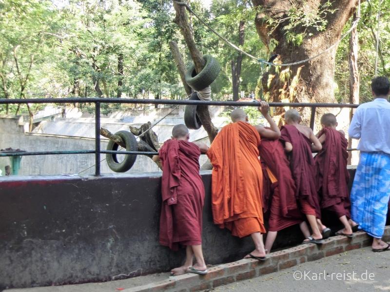 Mönche Novizen Yangon Zoo