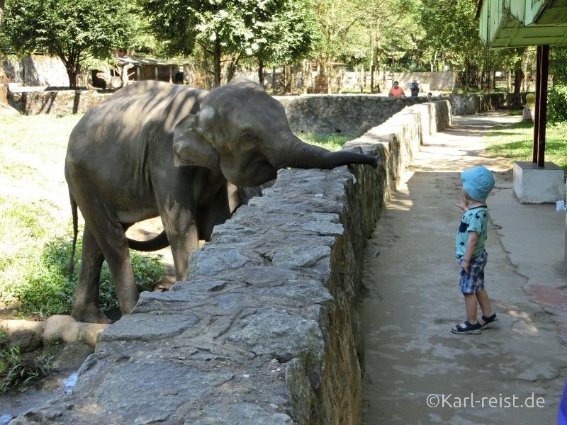 Kind füttert Elefant Yangon Zoo Myanmar