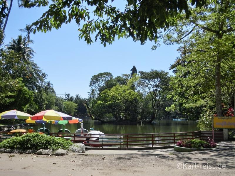 See im Yangon Zoo Myanmar