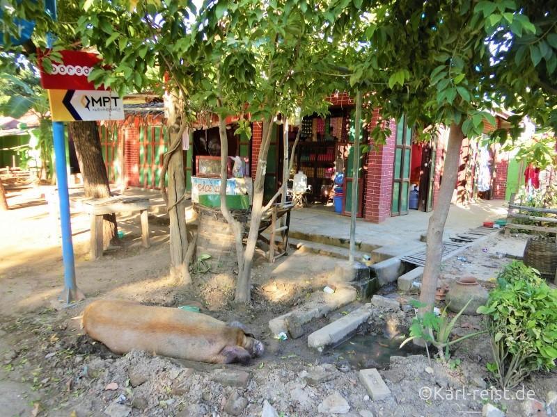 Schwein vor Shop in Bagan