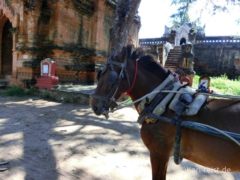 Bagan Pferdekutsche Pferd wartet