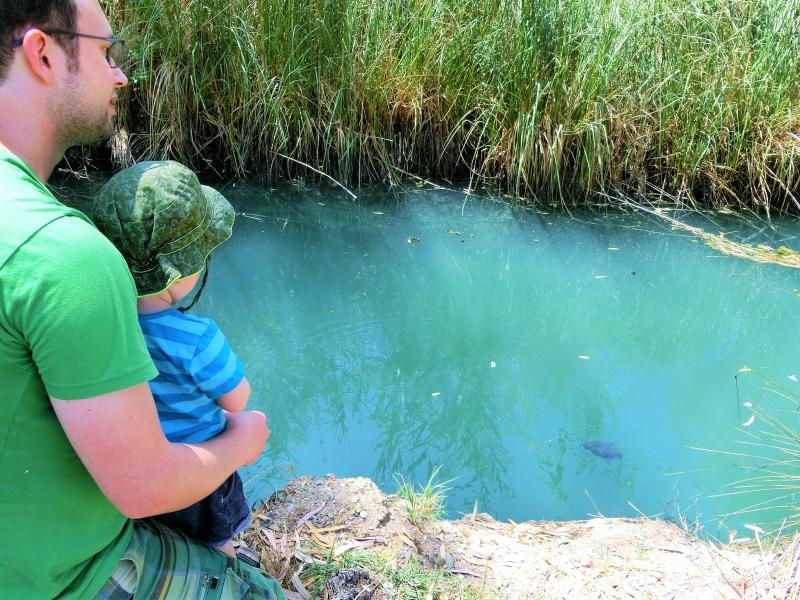 Schildkröten füttern Peloponnes Griechenland
