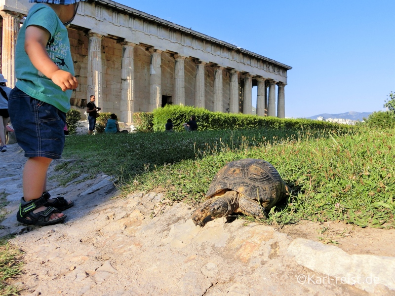 Schildkröten in Athen
