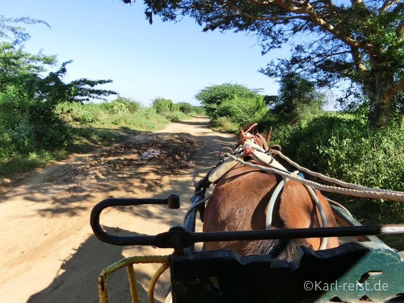 Pferdekutsche in Bagan