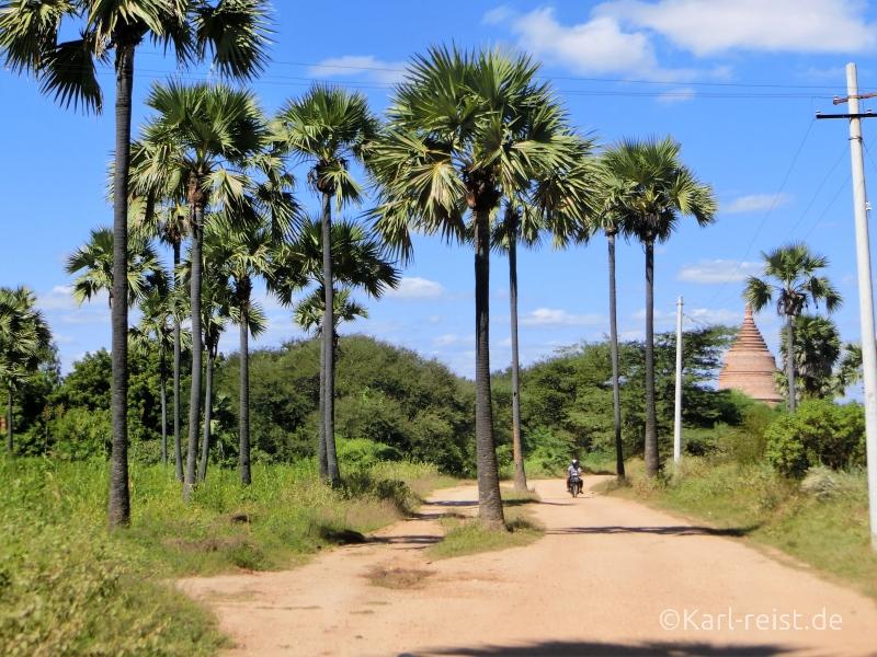 Sandweg mit Palmen und Tempel im Hintergrund