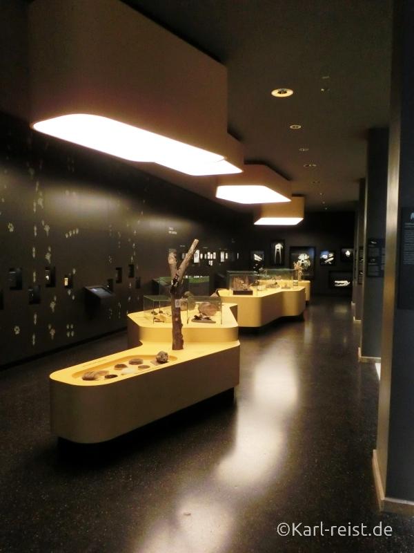 Entdeckersaal im Naturhistorischen Museum Braunschweig