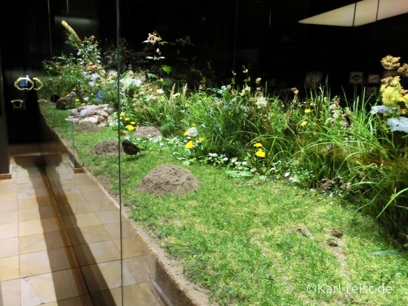 Landschaftsvitrine im Entdeckersaal im Naturhistorischen Museum Braunschweig