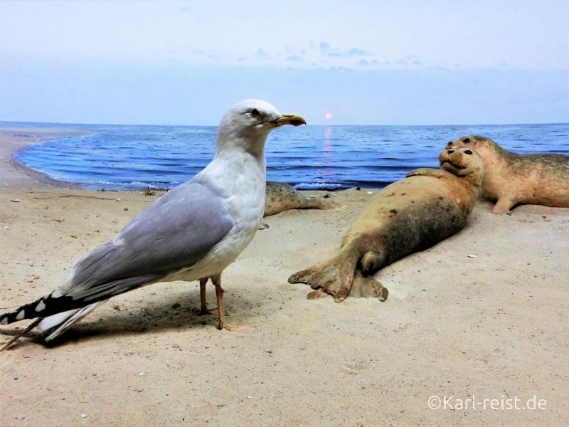 Diorama mit Möwe und Seehund im Naturhistorischen Museum Braunschweig