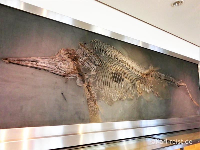 Dinosaurierskelett an der Wand der naturhistorischen Museums Braunschweig