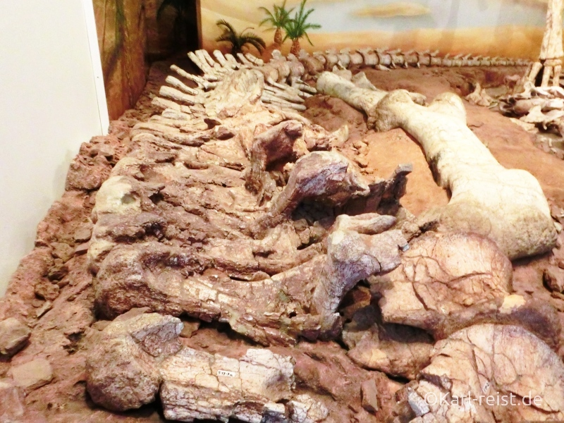 Langhalsskelett Dinosaurier Teilskelett Naturhistorisches Museum Braunschweig