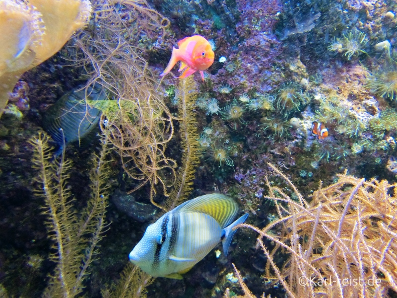 Aquarium im Naturhistorischen Museum Braunschweig