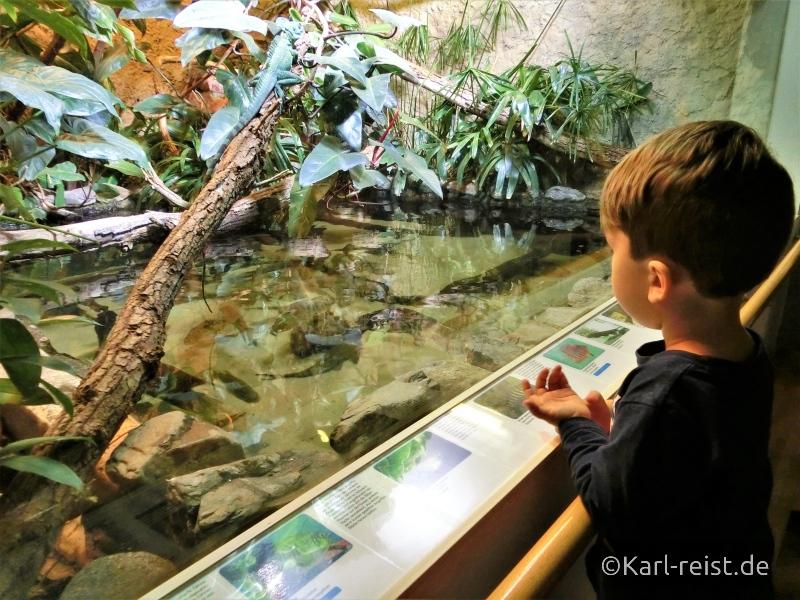 Chamäleon Aquarium im Naturhistorischen Museum Braunschweig