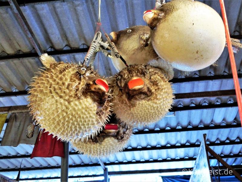 Kugelfischlampe Ban Phe Rayong