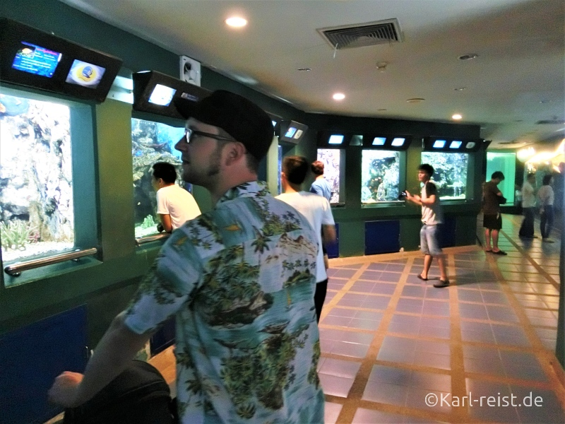 Aquarien im Rayong Aquarium Ban Phe