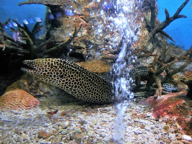 Aquarium im Rayong Aquarium Ban Phe