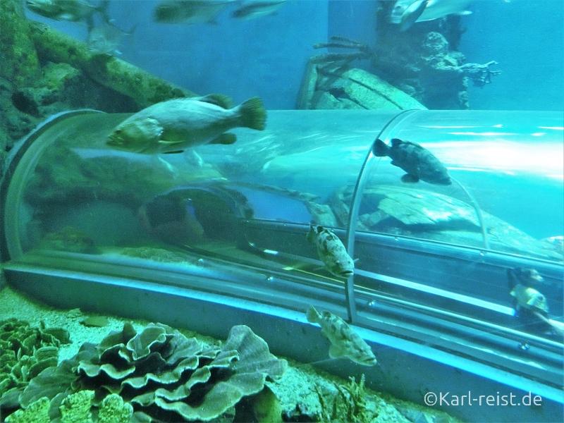 Begehbarer Tunnel im Aquarium im Rayong Aquarium Ban Phe