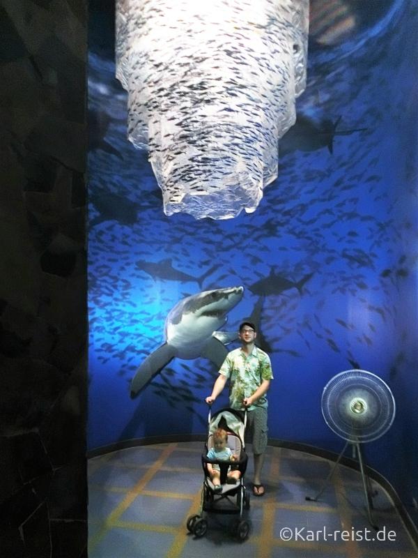 Fischschwarm Aquarium im Rayong Aquarium Ban Phe