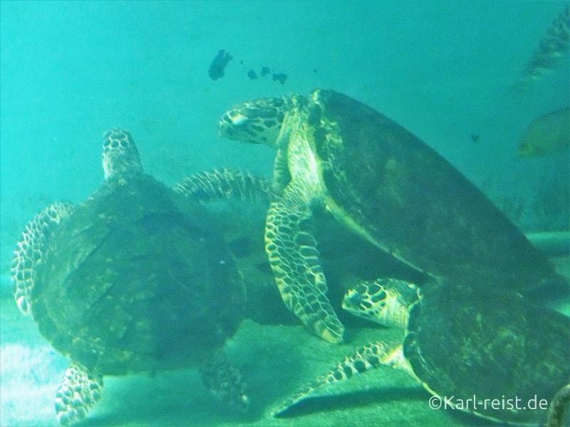 Schildkröten im Aquarium im Rayong Aquarium Ban Phe