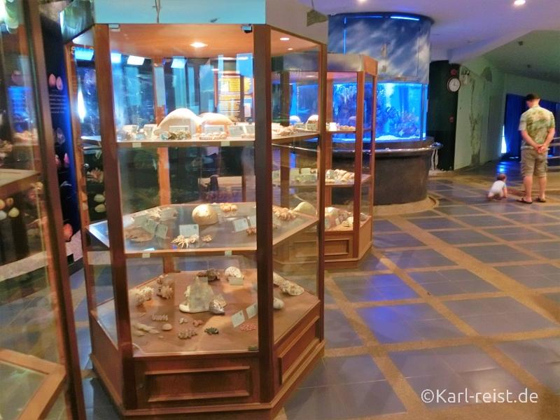 Vitrinen im Rayong Aquarium Ban Phe