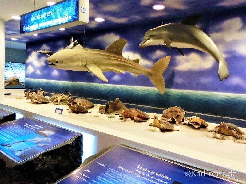 Modelle im Rayong Aquarium Ban Phe