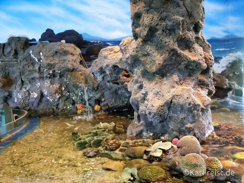 Eingangsbereich Säule im Rayong Aquarium Ban Phe