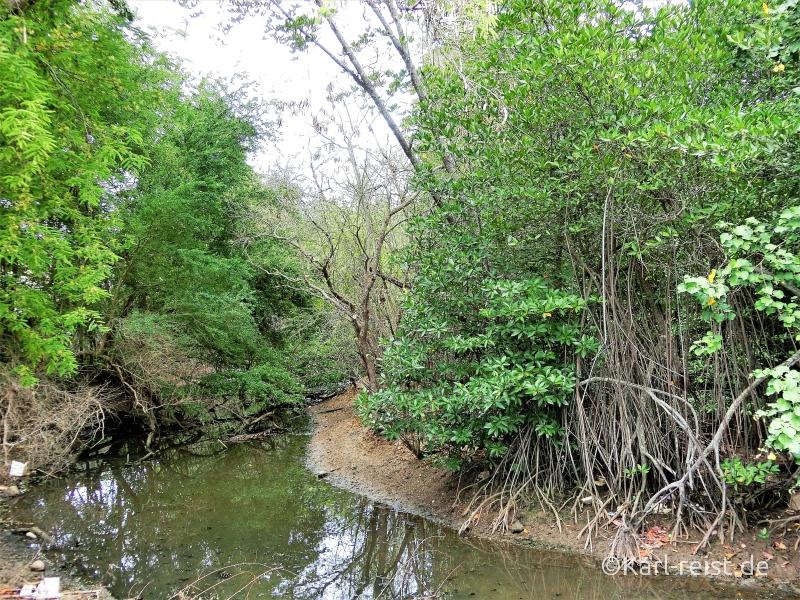 Mangroven Ban Phe Rayong