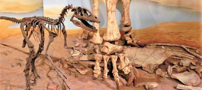 Auf Dinosaurier Jagd im Naturhistorischen Museum Braunschweig