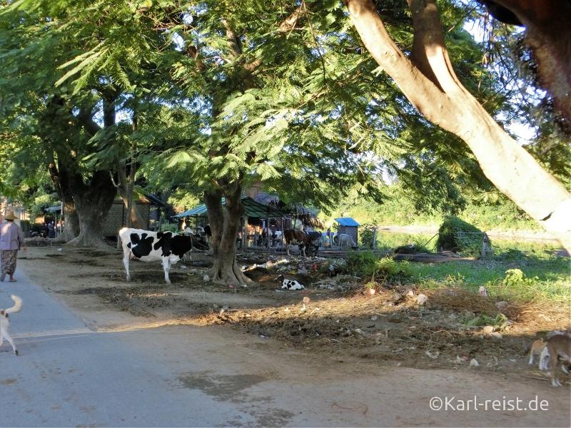 Aussicht aus der Pferdekutsche bei Insel Inwa