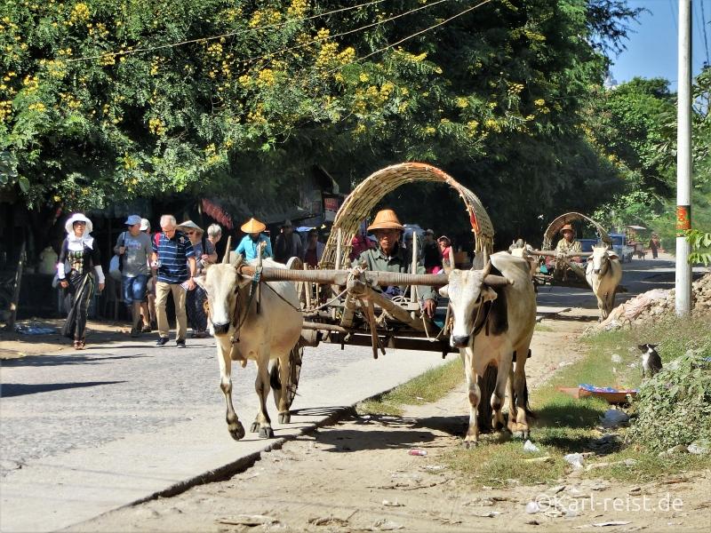 Ochsenkarren in Mingun