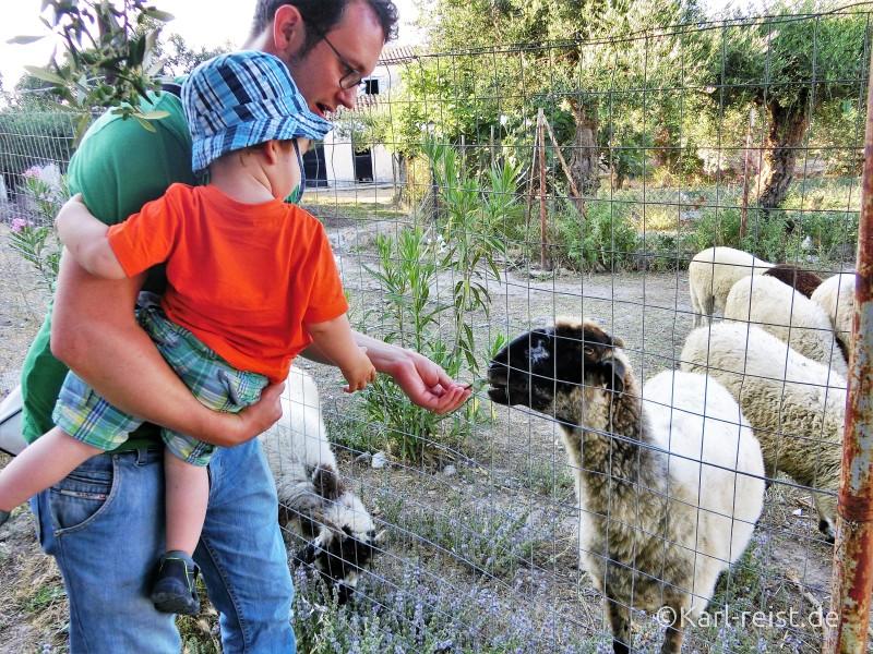 Schafe füttern im Kloster Koroni