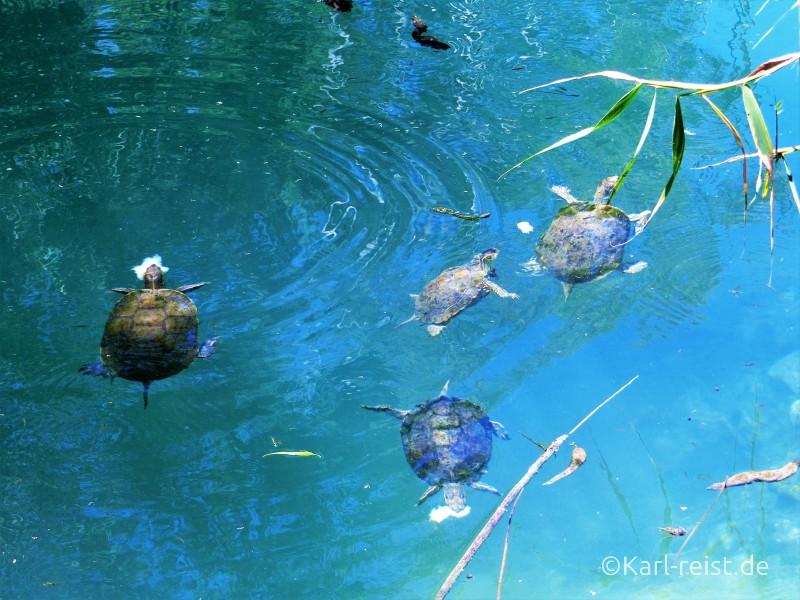 Kaiafa Fluss mit Schildkröten am Heilbad