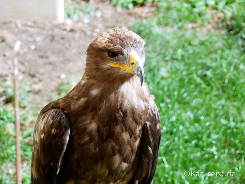 Geants du Ciel Adler
