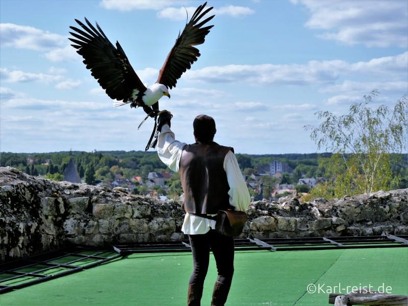 Geants du Ciel Weißkopfseeadler