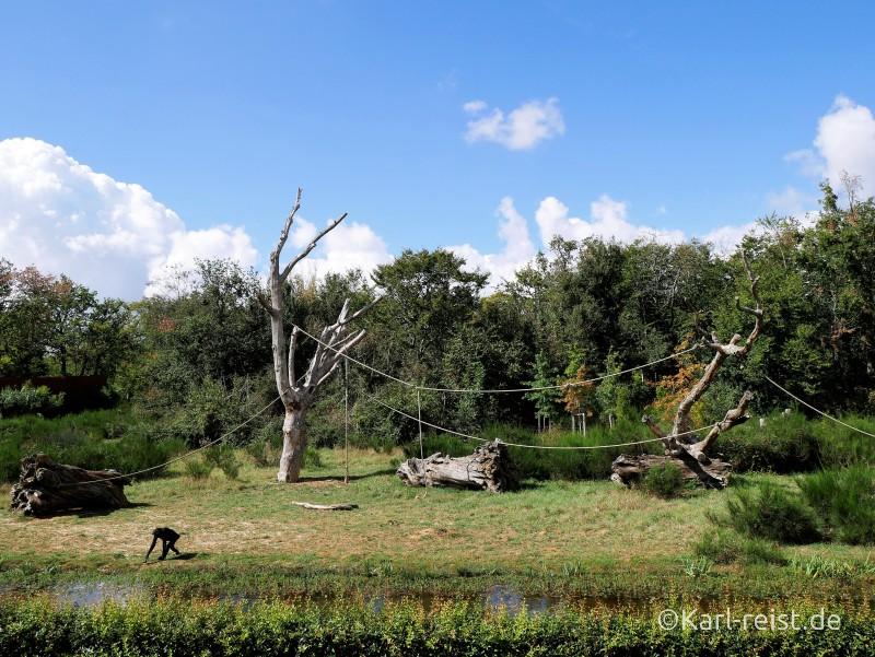 Vallée des Singes Romange Tal der Affen Zwergschimpanse Bonobo
