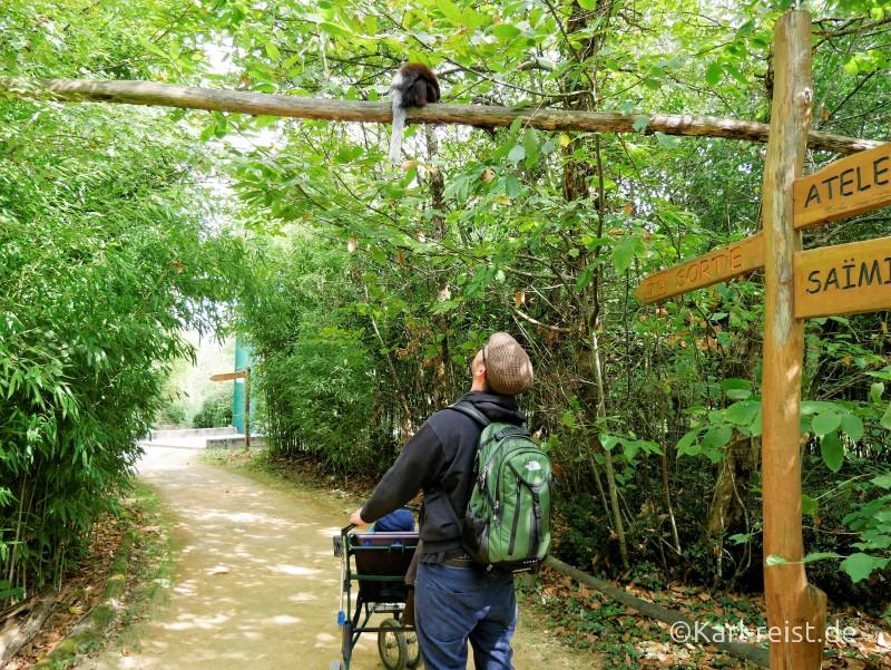 Vallée des Singes Romange Tal der Affen Spazierweg