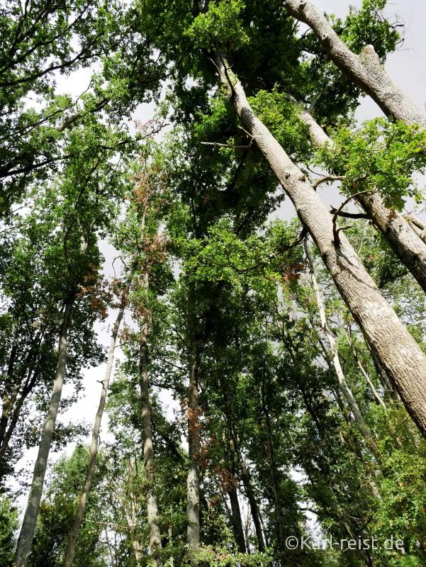 Vallée des Singes Romange Tal der Affen Berberaffen im Baum