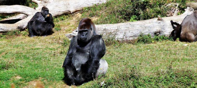La Vallée des Singes – Der beste Affenpark in Frankreich – OHNE Zäune und Käfige!