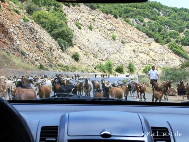 Ziegen auf der Peloponnes