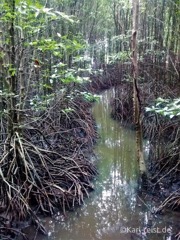 Chanthaburi Mangroven 1