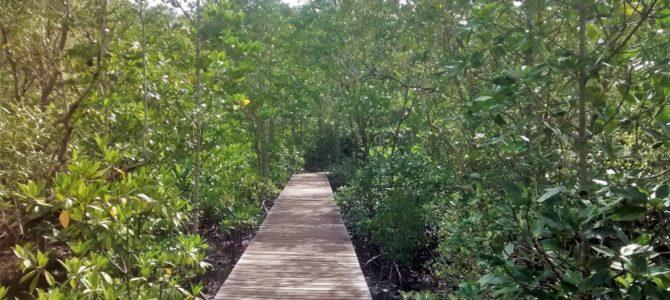 Strände, Mangroven und Delfine: Ausflugsziele rund um Chanthaburi