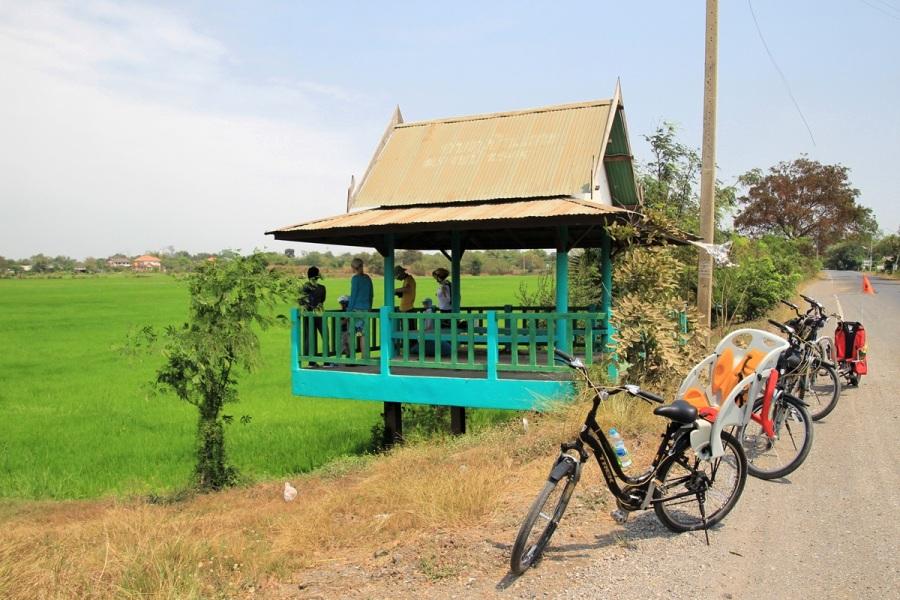Ausblick auf Reisfeld bei Fahrradtour Thailand