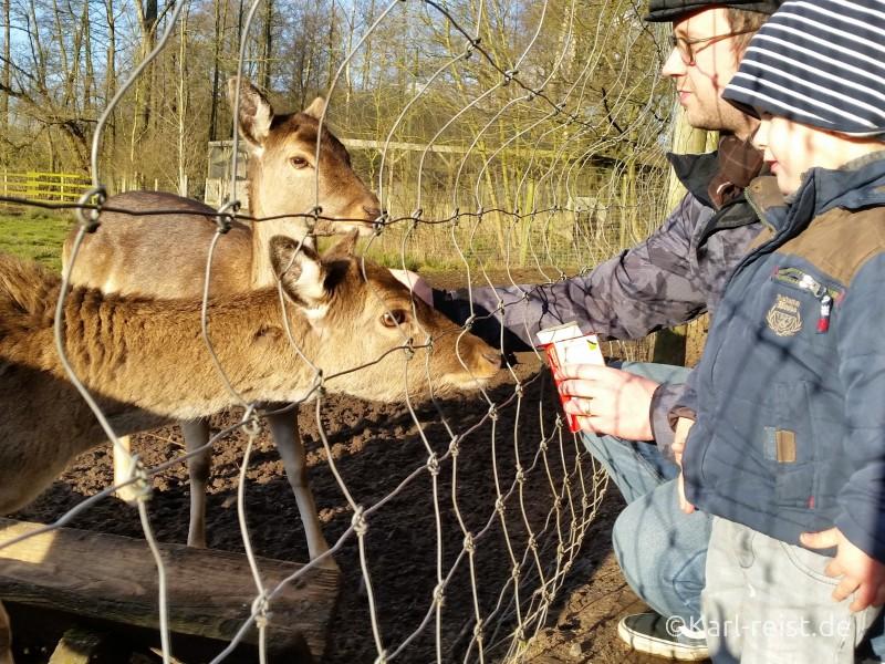 Wildpark Eekholt Wild füttern