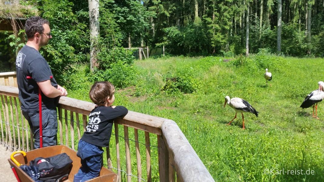 Wildpark Eekholt Storch