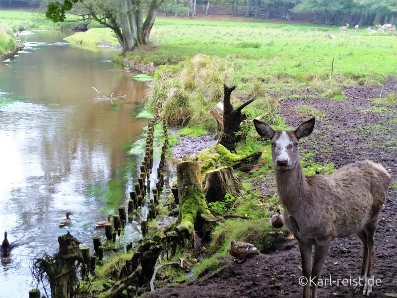Wildpark Eekholt Wild